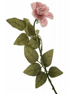 Rosa catenella